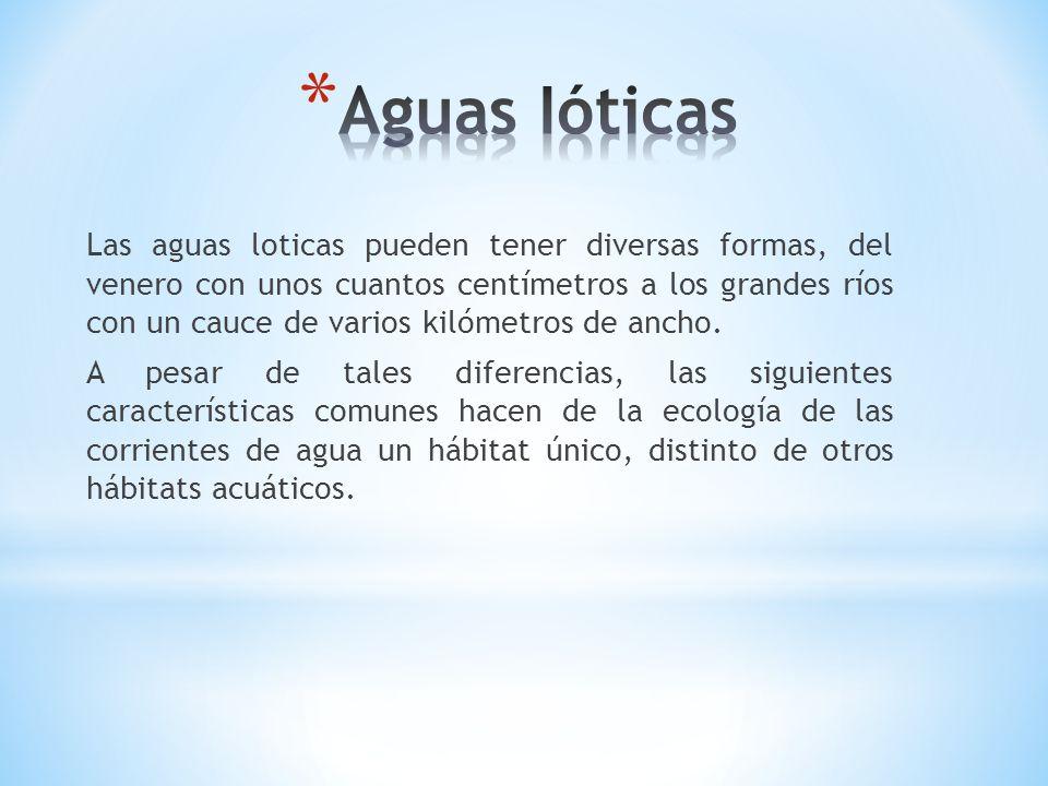 Las aguas loticas pueden tener diversas formas, del venero con unos cuantos centímetros a los grandes ríos con un cauce de varios kilómetros de ancho.