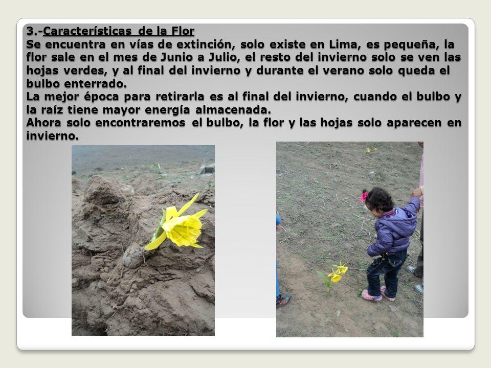 4.-Autorización.- Debido a que es propiedad privada, el señor Jacinto, dirigente de la Comunidad de Quebrada Verde se ha comprometido en pedir una carta poder al actual propietario.