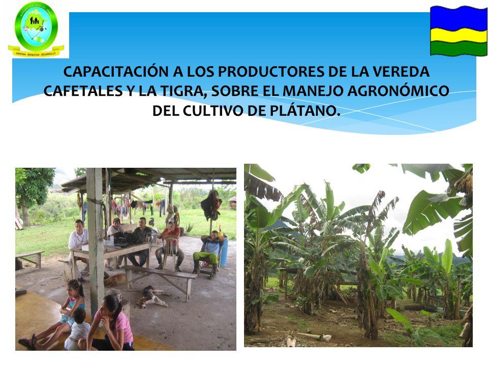 CAPACITACIÓN A LOS PRODUCTORES DE LA VEREDA CAFETALES Y LA TIGRA, SOBRE EL MANEJO AGRONÓMICO DEL CULTIVO DE PLÁTANO.