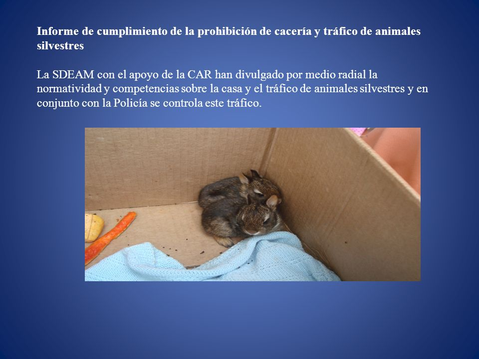 Informe de cumplimiento de la prohibición de cacería y tráfico de animales silvestres La SDEAM con el apoyo de la CAR han divulgado por medio radial l