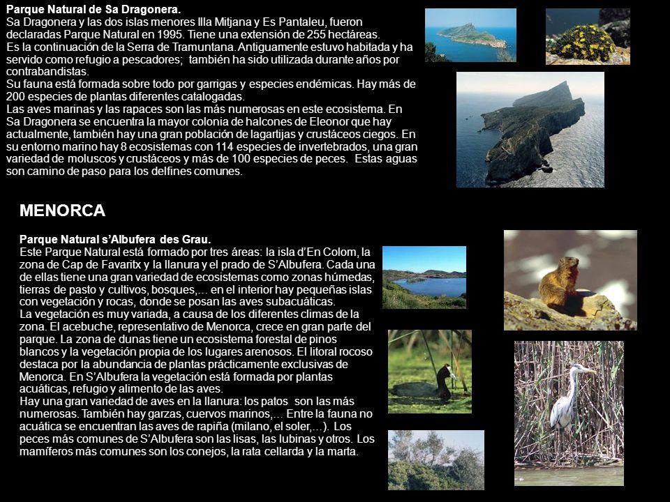 Parque Natural de Sa Dragonera. Sa Dragonera y las dos islas menores Illa Mitjana y Es Pantaleu, fueron declaradas Parque Natural en 1995. Tiene una e
