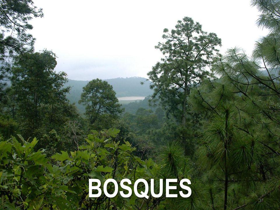 BOSQUES 37
