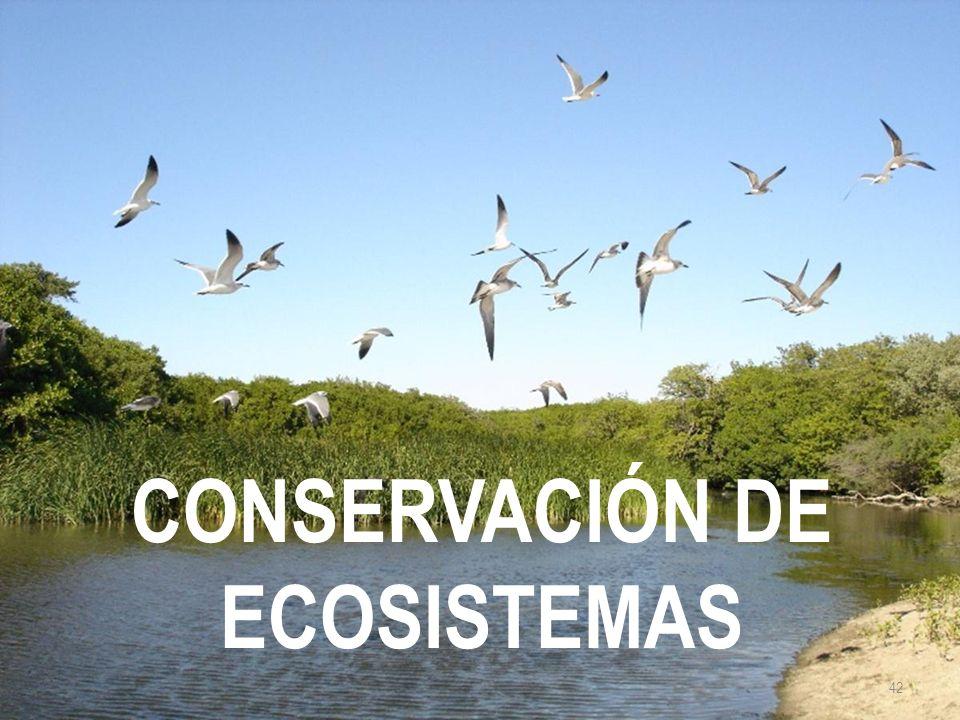 CONSERVACIÓN DE ECOSISTEMAS 42