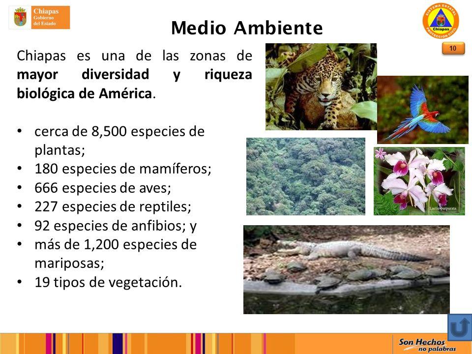 10 Medio Ambiente Chiapas es una de las zonas de mayor diversidad y riqueza biológica de América.