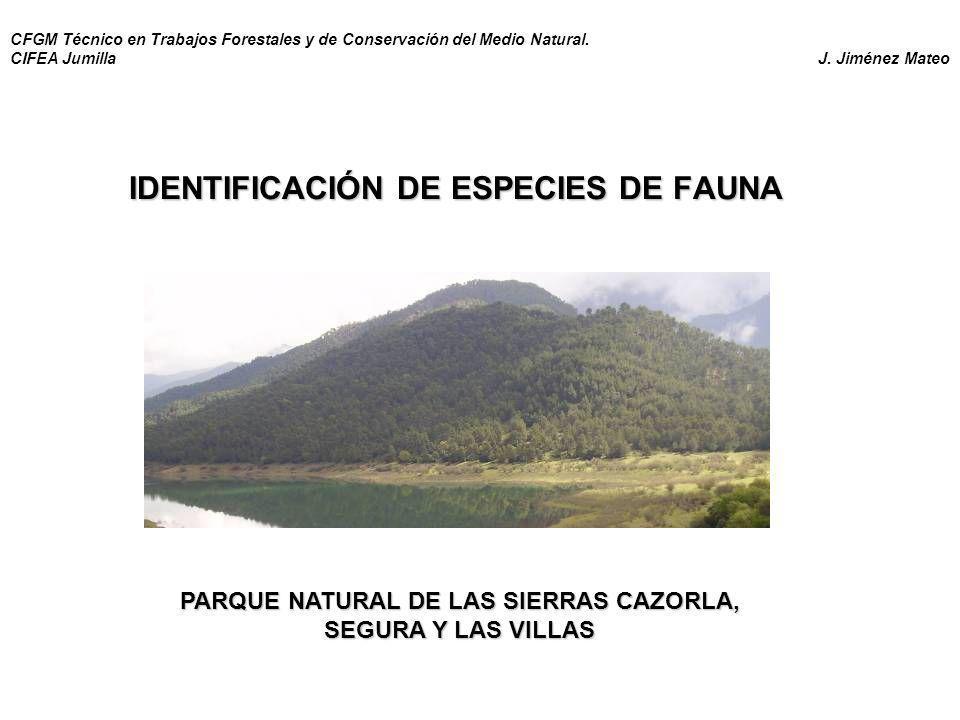 IDENTIFICACIÓN DE ESPECIES DE FAUNA PARQUE NATURAL DE LAS SIERRAS CAZORLA, SEGURA Y LAS VILLAS CFGM Técnico en Trabajos Forestales y de Conservación d