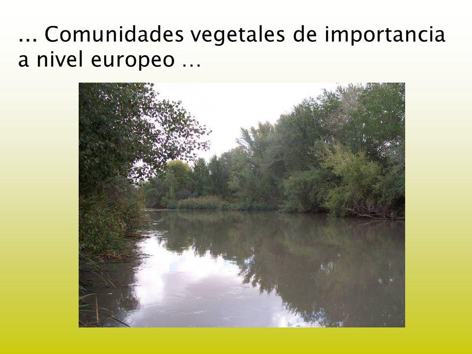 ... Comunidades vegetales de importancia a nivel europeo …