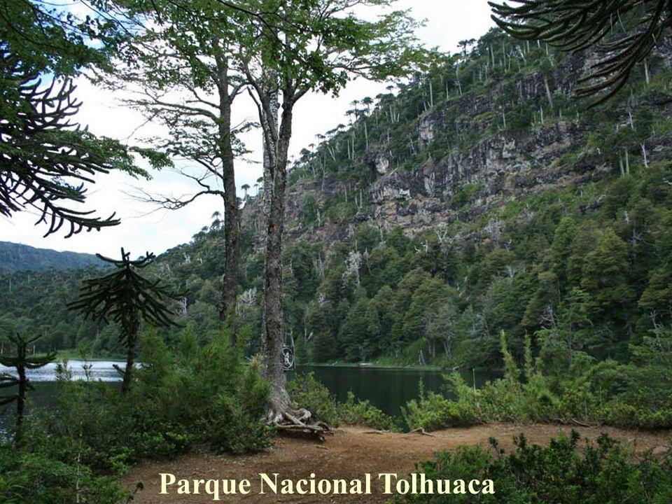 Un poco al norte del Centro de esquí Las Araucarias, existe otra área protegida, el Parque Nacional Tolhuaca