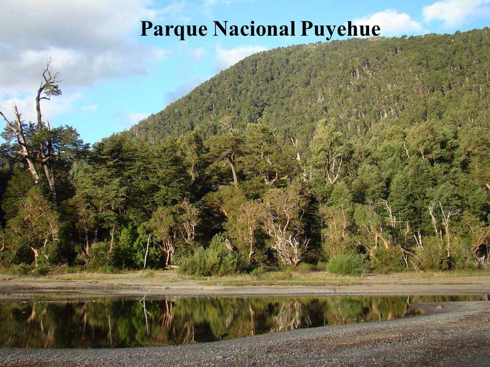 Osorno es el eje de una zona eminentemente agrícola y ganadera, por un lado. Por otro, es punto de partida para recorrer lugares tan bellos como el la