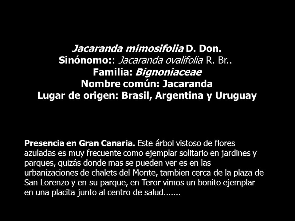 Jacaranda mimosifolia D. Don. Sinónomo:: Jacaranda ovalifolia R. Br.. Familia: Bignoniaceae Nombre común: Jacaranda Lugar de origen: Brasil, Argentina