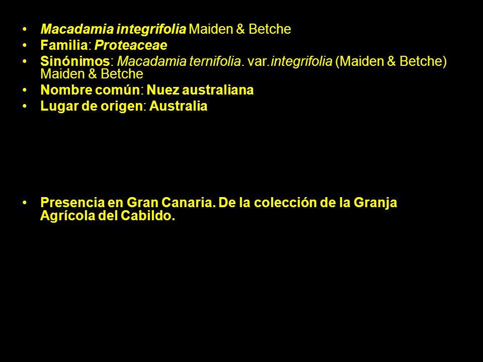 Macadamia integrifolia Maiden & Betche Familia: Proteaceae Sinónimos: Macadamia ternifolia. var.integrifolia (Maiden & Betche) Maiden & Betche Nombre
