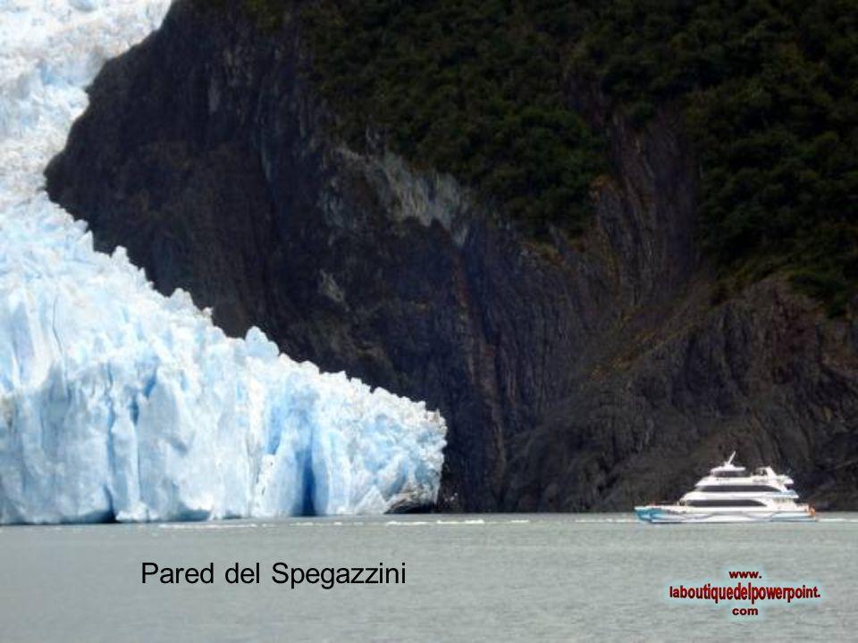 Pared del Spegazzini