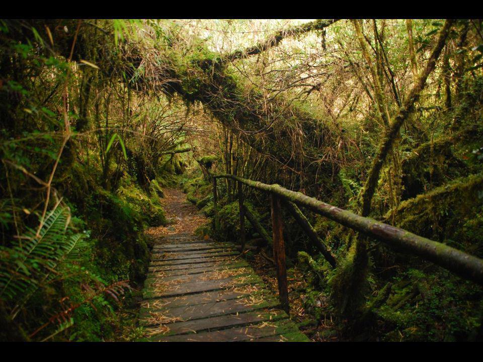 El recorrido por el Parque Nacional Queulat nos obliga a internarnos en zonas de verdadera jungla patagónica, un paisaje que parece ser parte de un mu