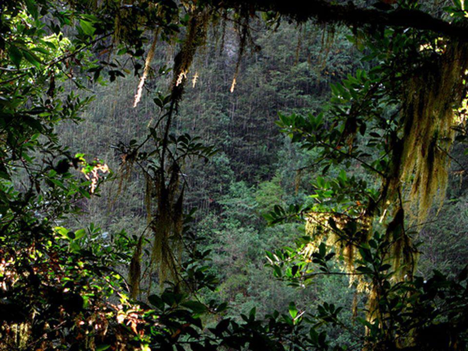 Gran parte del parque Queulat está cubierto por el llamado Bosque valdiviano, una zona tan densamente cubierta de vegetación que resulta en su mayor p