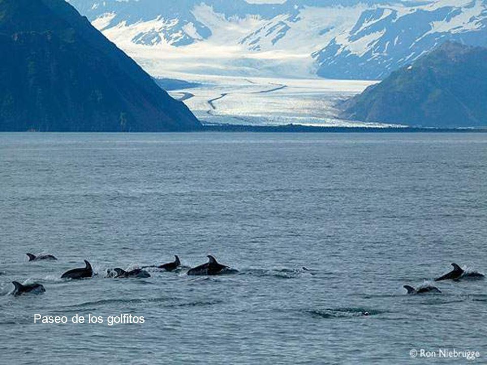 ballena orca