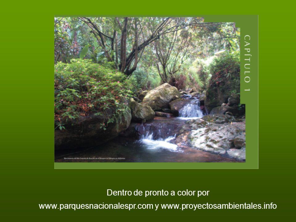 Dentro de pronto a color por www.parquesnacionalespr.com y www.proyectosambientales.info