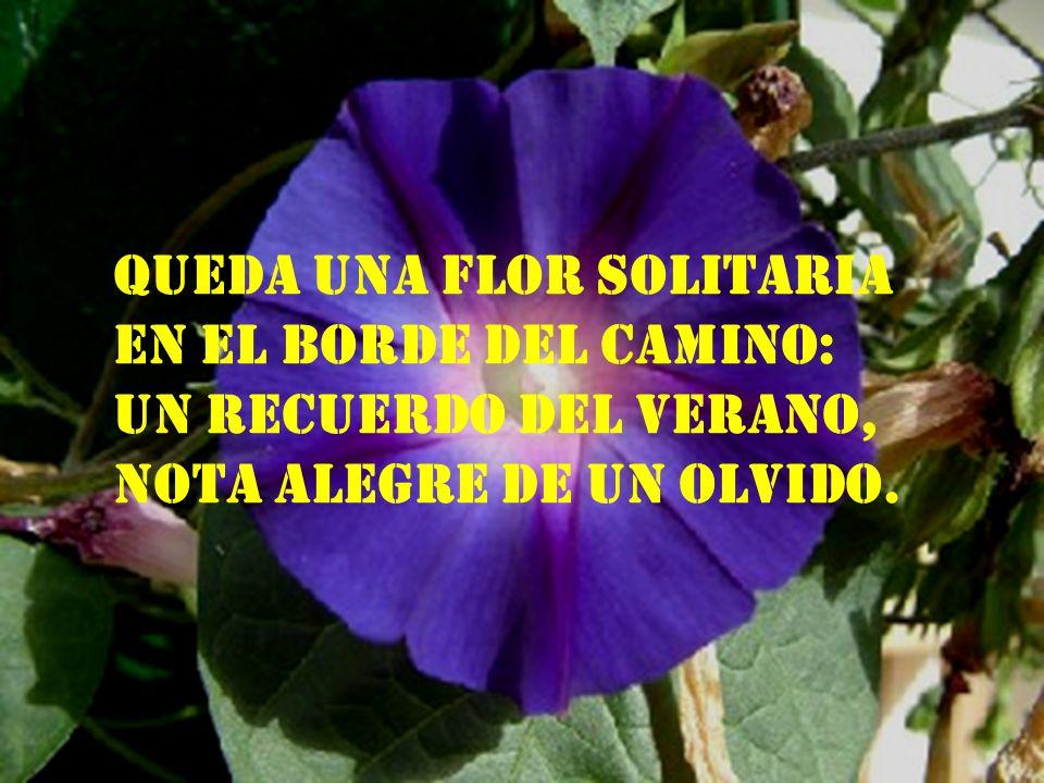 Queda una flor solitaria en el borde del camino: un recuerdo del verano, nota alegre de un olvido.