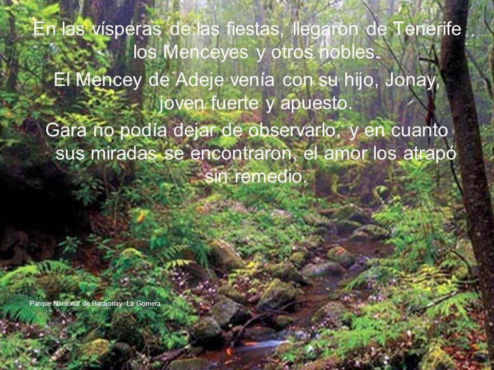 En las vísperas de las fiestas, llegaron de Tenerife los Menceyes y otros nobles.