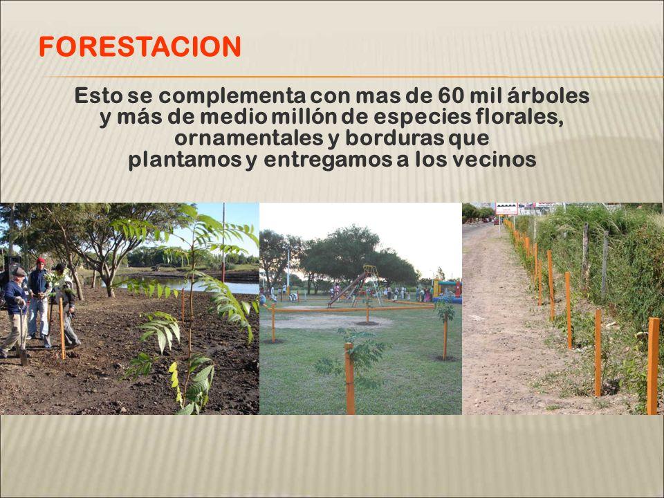 Esto se complementa con mas de 60 mil árboles y más de medio millón de especies florales, ornamentales y borduras que plantamos y entregamos a los vecinos FORESTACION