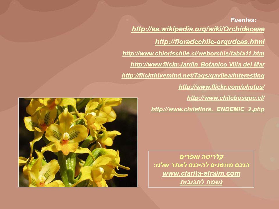 http://es.wikipedia.org/wiki/Orchidaceae http://floradechile-orqudeas.html http://www.chlorischile.cl/weborchis/tabla11.htm http://www.flickr.Jardin B