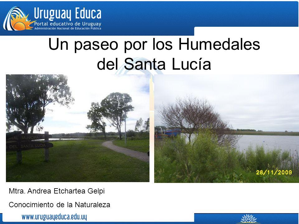 Un paseo por los Humedales del Santa Lucía Mtra. Andrea Etchartea Gelpi Conocimiento de la Naturaleza