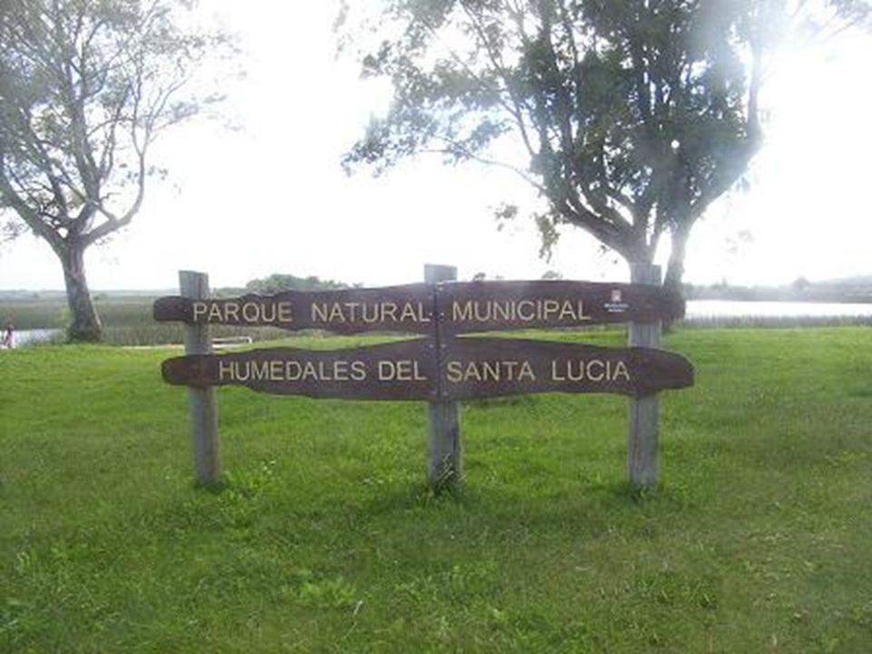 Humedales del Santa Lucía Ecosistema que se distribuye en parte de los departamentos de San José, Montevideo y Canelones.