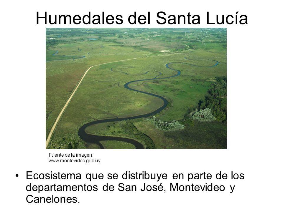 Humedales del Santa Lucía Ecosistema que se distribuye en parte de los departamentos de San José, Montevideo y Canelones. Fuente de la imagen: www.mon