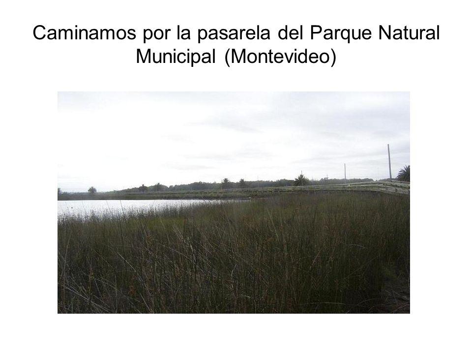 Caminamos por la pasarela del Parque Natural Municipal (Montevideo)
