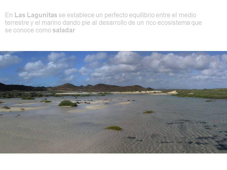 LAS LAGUNITAS Laguna costera situada al SE de la isla de Lobos que se inunda periódicamente con la fluctuación de las mareas