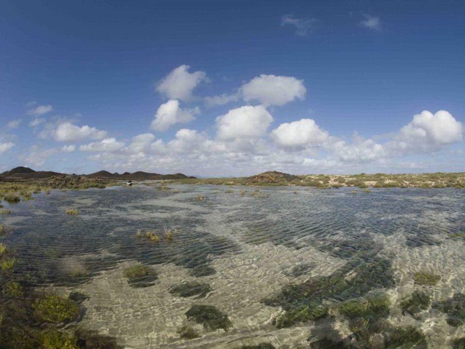 En Las Lagunitas se establece un perfecto equilibrio entre el medio terrestre y el marino dando pie al desarrollo de un rico ecosistema que se conoce como saladar