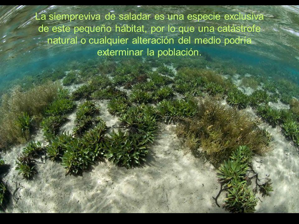 manuel carrillo & juanmi alemani. 2010 www. canariasconservacion.org