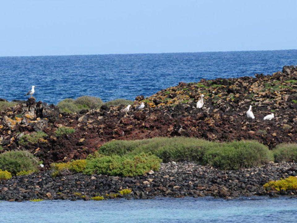 En la red europea NATURA 2000, toda la isla está considerada zona de especial conservación (ZEC) y zona de especial protección para las aves (ZEPA)