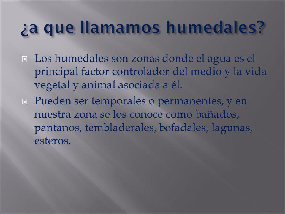 ¿a que llamamos humedales? Los humedales son zonas donde el agua es el principal factor controlador del medio y la vida vegetal y animal asociada a él