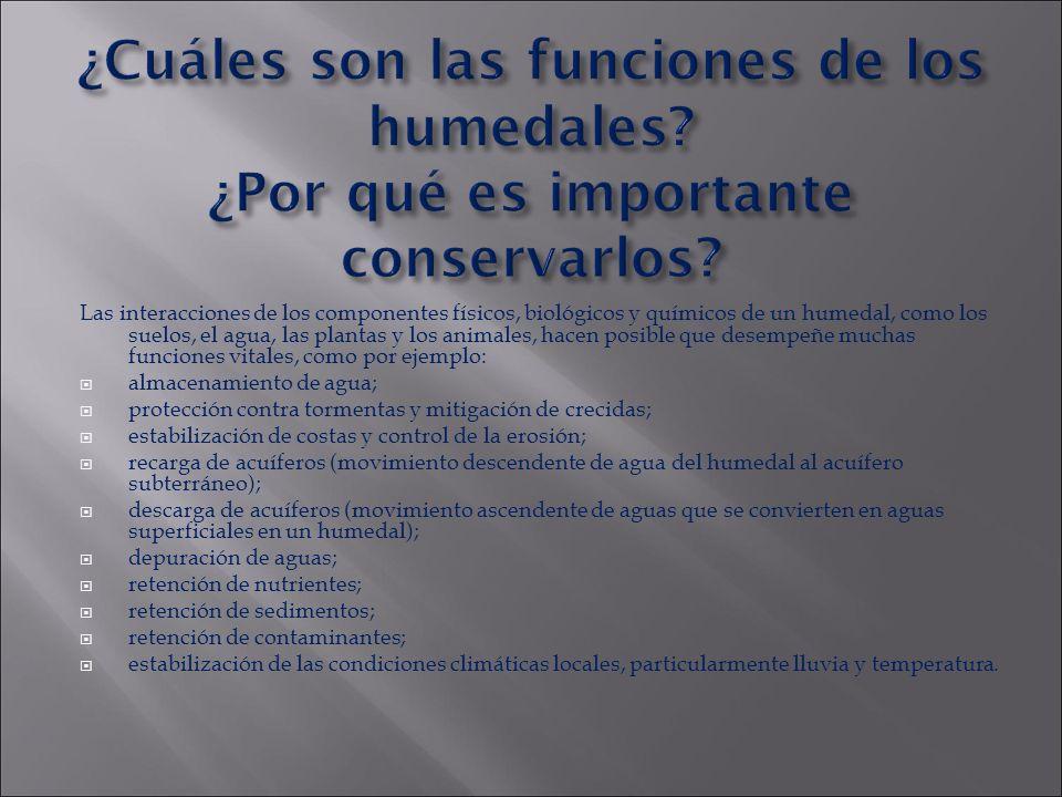 ¿Cuáles son las funciones de los humedales? ¿Por qué es importante conservarlos? Las interacciones de los componentes físicos, biológicos y químicos d