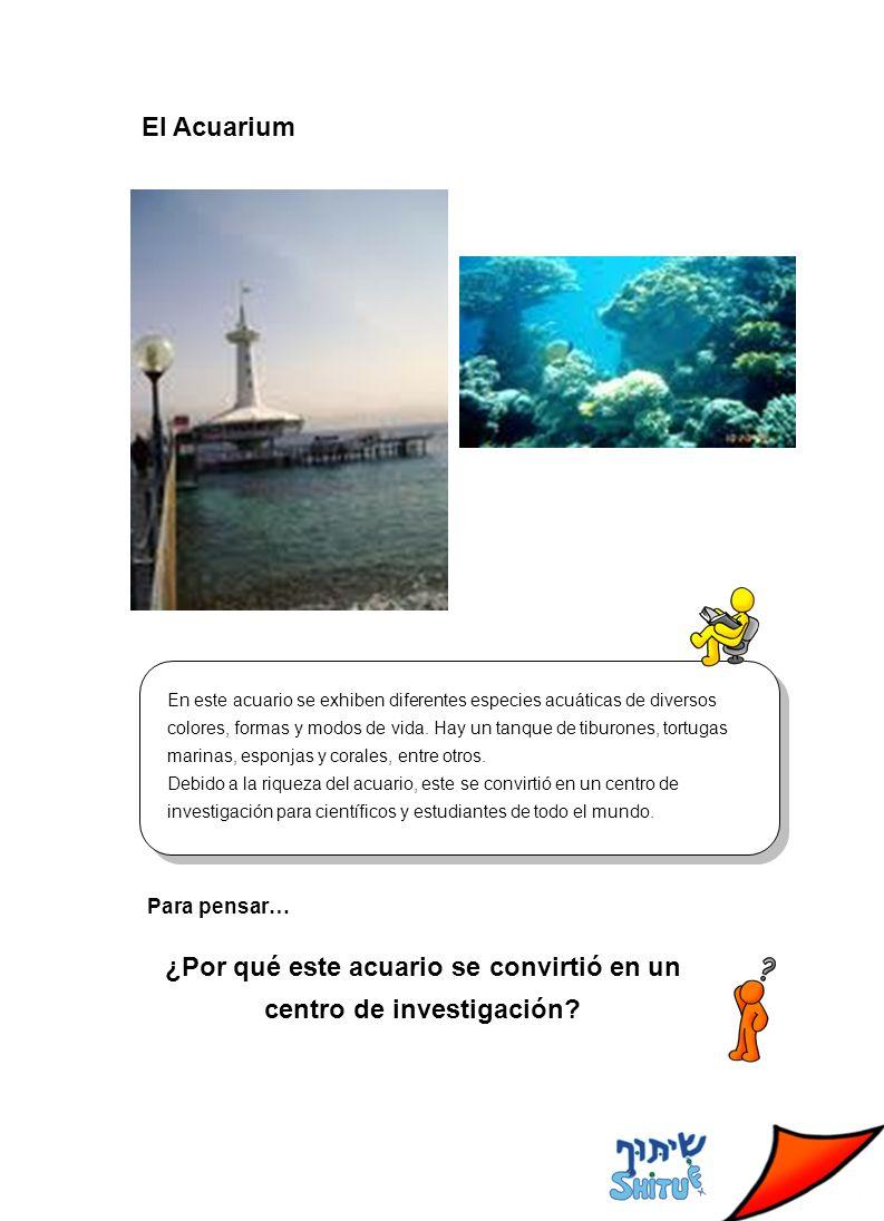 El Acuarium En este acuario se exhiben diferentes especies acuáticas de diversos colores, formas y modos de vida.