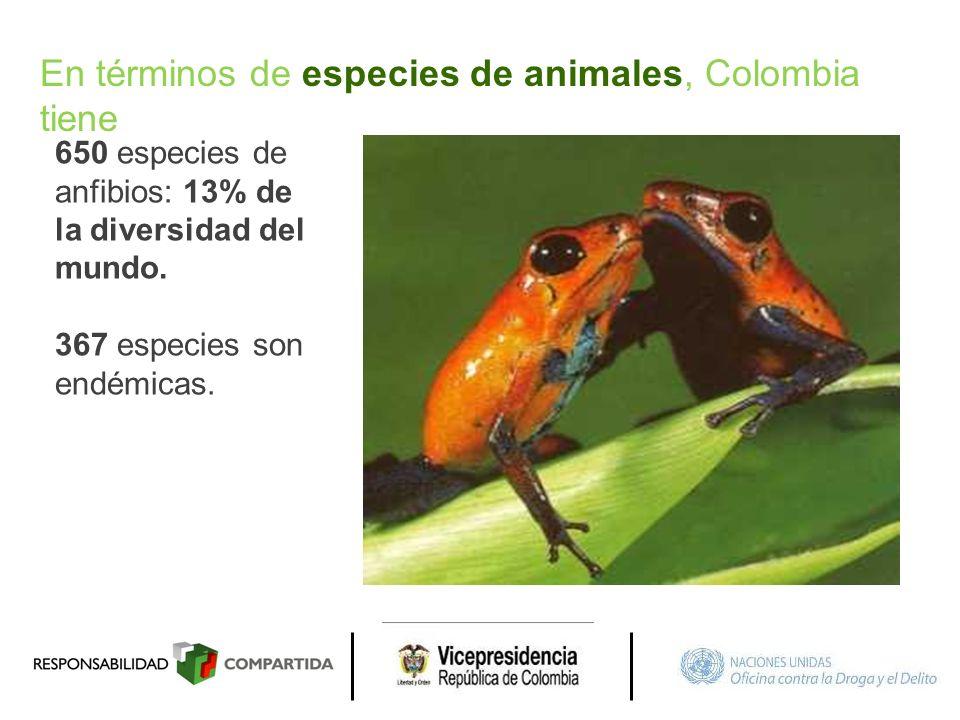 650 especies de anfibios: 13% de la diversidad del mundo. 367 especies son endémicas. En términos de especies de animales, Colombia tiene