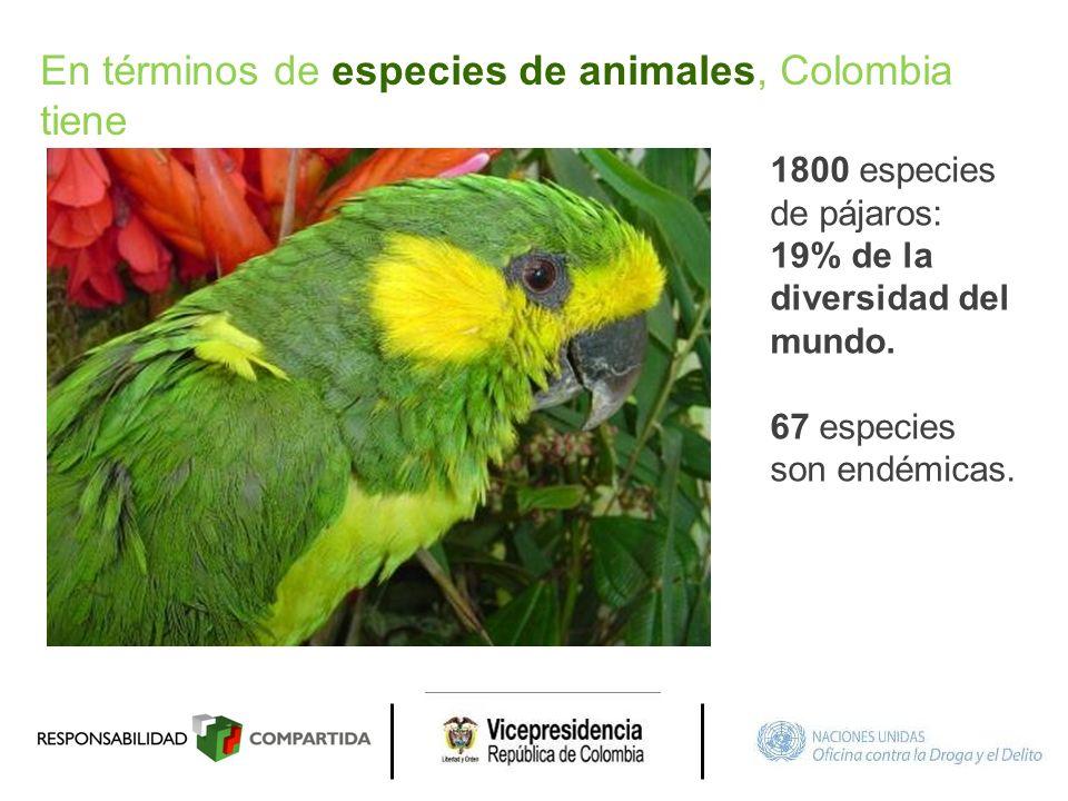 1800 especies de pájaros: 19% de la diversidad del mundo. 67 especies son endémicas. En términos de especies de animales, Colombia tiene