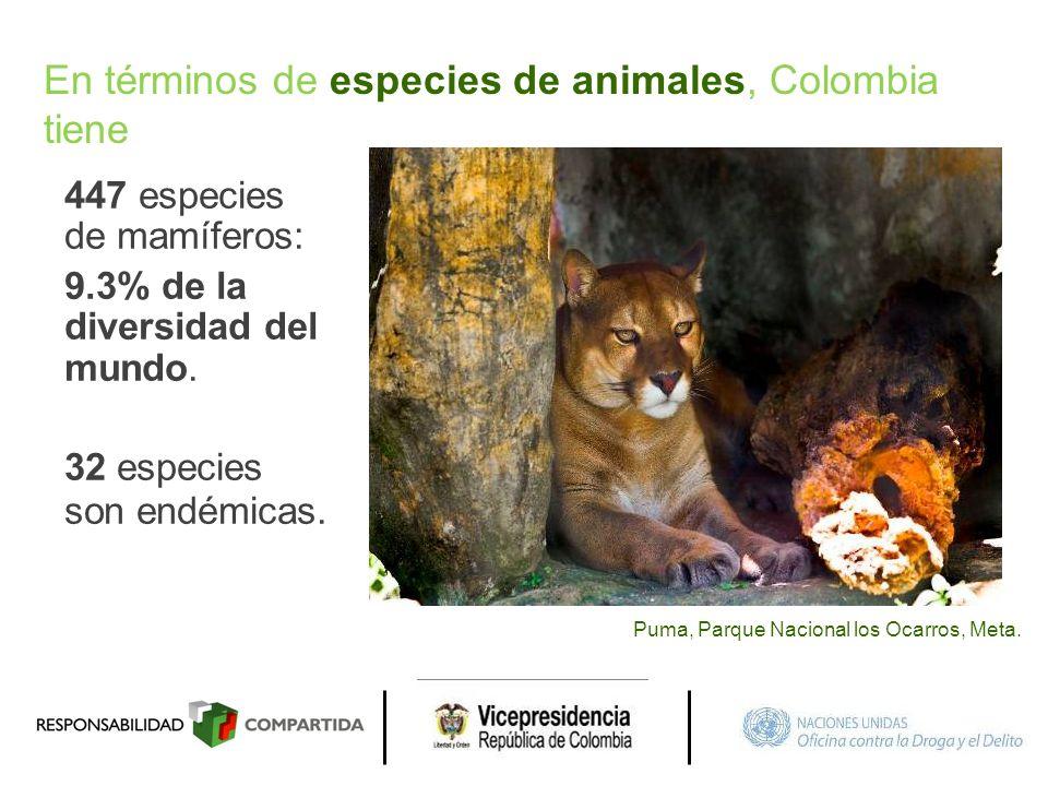 447 especies de mamíferos: 9.3% de la diversidad del mundo. 32 especies son endémicas. Puma, Parque Nacional los Ocarros, Meta. En términos de especie