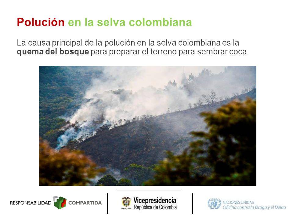 Polución en la selva colombiana La causa principal de la polución en la selva colombiana es la quema del bosque para preparar el terreno para sembrar