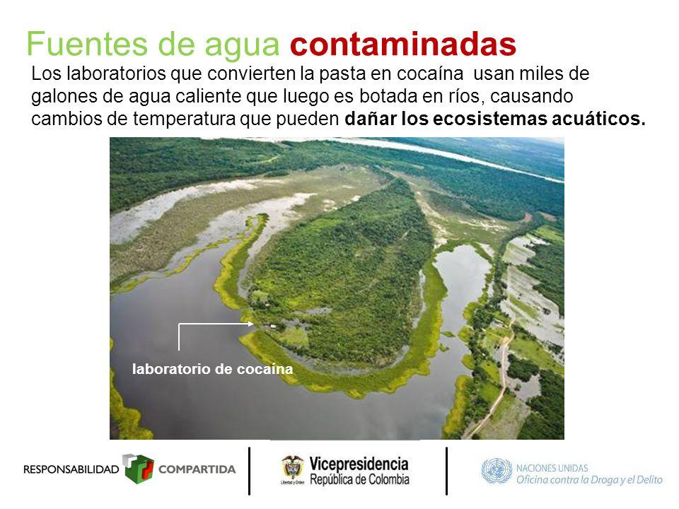 Fuentes de agua contaminadas Los laboratorios que convierten la pasta en cocaína usan miles de galones de agua caliente que luego es botada en ríos, c
