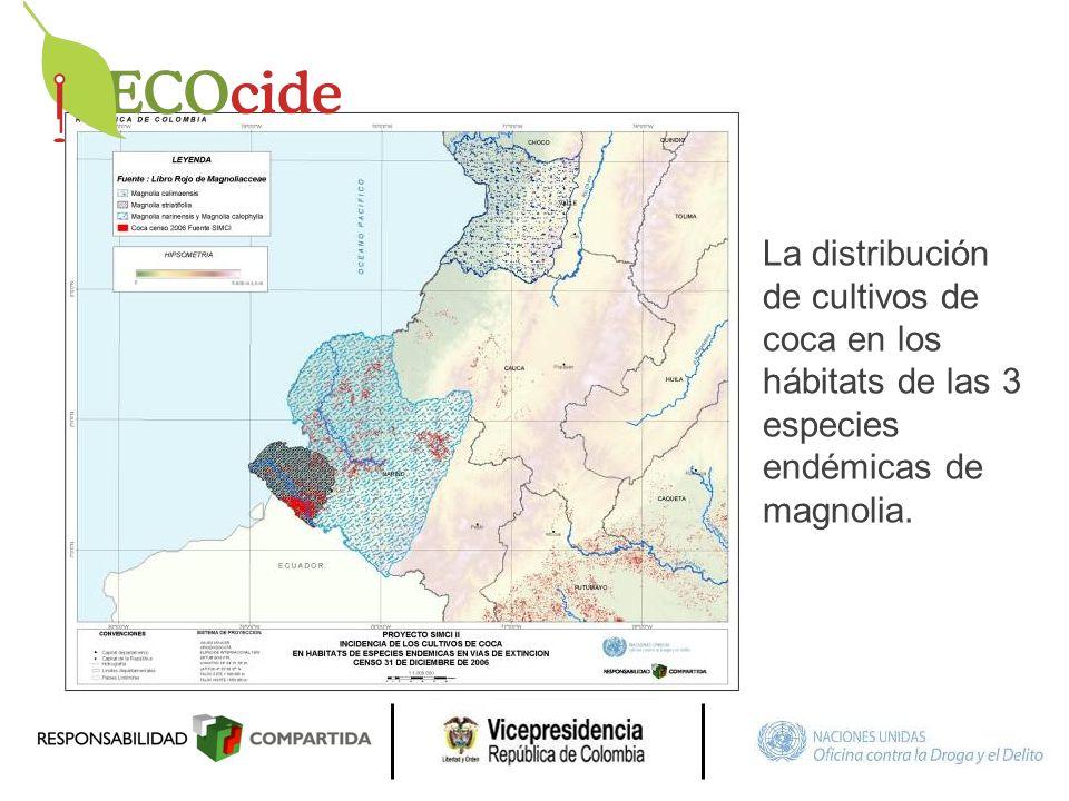 La distribución de cultivos de coca en los hábitats de las 3 especies endémicas de magnolia.