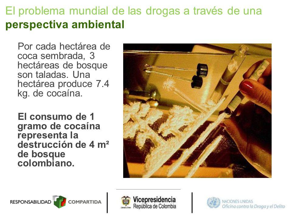 Por cada hectárea de coca sembrada, 3 hectáreas de bosque son taladas. Una hectárea produce 7.4 kg. de cocaína. El consumo de 1 gramo de cocaína repre