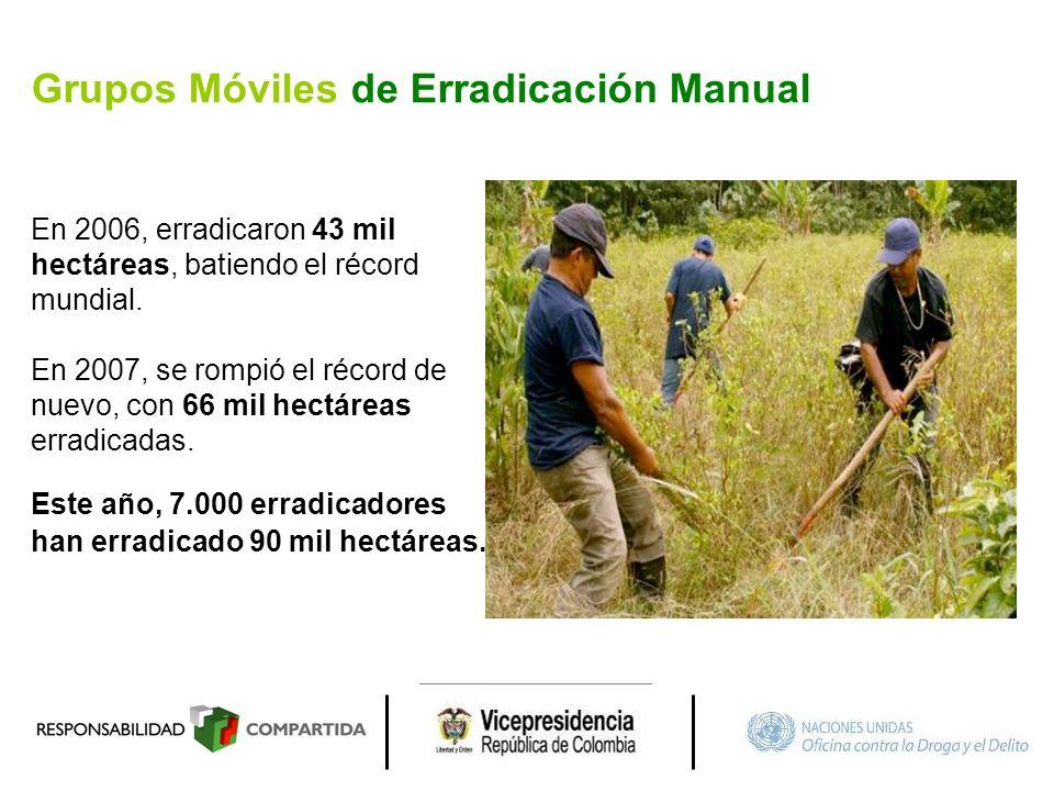 Grupos Móviles de Erradicación Manual En 2006, erradicaron 43 mil hectáreas, batiendo el récord mundial. En 2007, se rompió el récord de nuevo, con 66