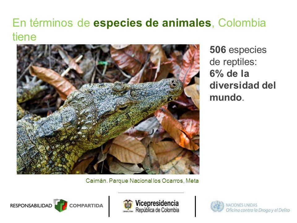 Caimán. Parque Nacional los Ocarros, Meta 506 especies de reptiles: 6% de la diversidad del mundo. En términos de especies de animales, Colombia tiene