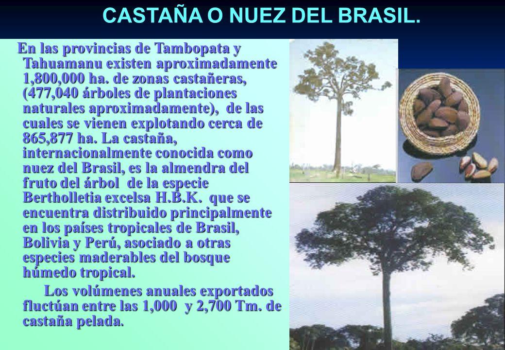 LAS MADERAS TROPICALES Los recursos forestales está representada por más de 60 especies maderables, siendo las de mayor importancia económica la Caoba