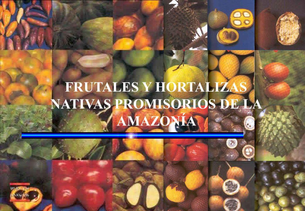 PLANTAS MEDICINALES En extenso territorio de la Región Madre de Dios posee una gran variedad de plantas medicinales, muy conocidas y comercializadas a