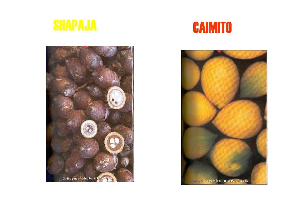 CASTAÑA CAMU