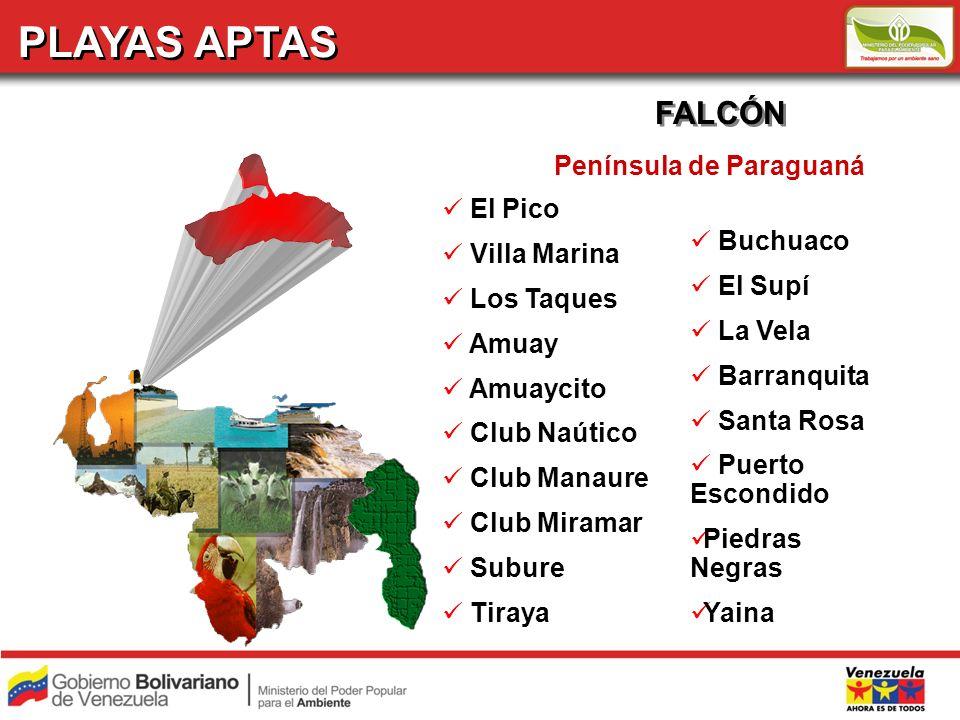 PLAYAS APTAS FALCÓN El Pico Villa Marina Los Taques Amuay Amuaycito Club Naútico Club Manaure Club Miramar Subure Tiraya Península de Paraguaná Buchua