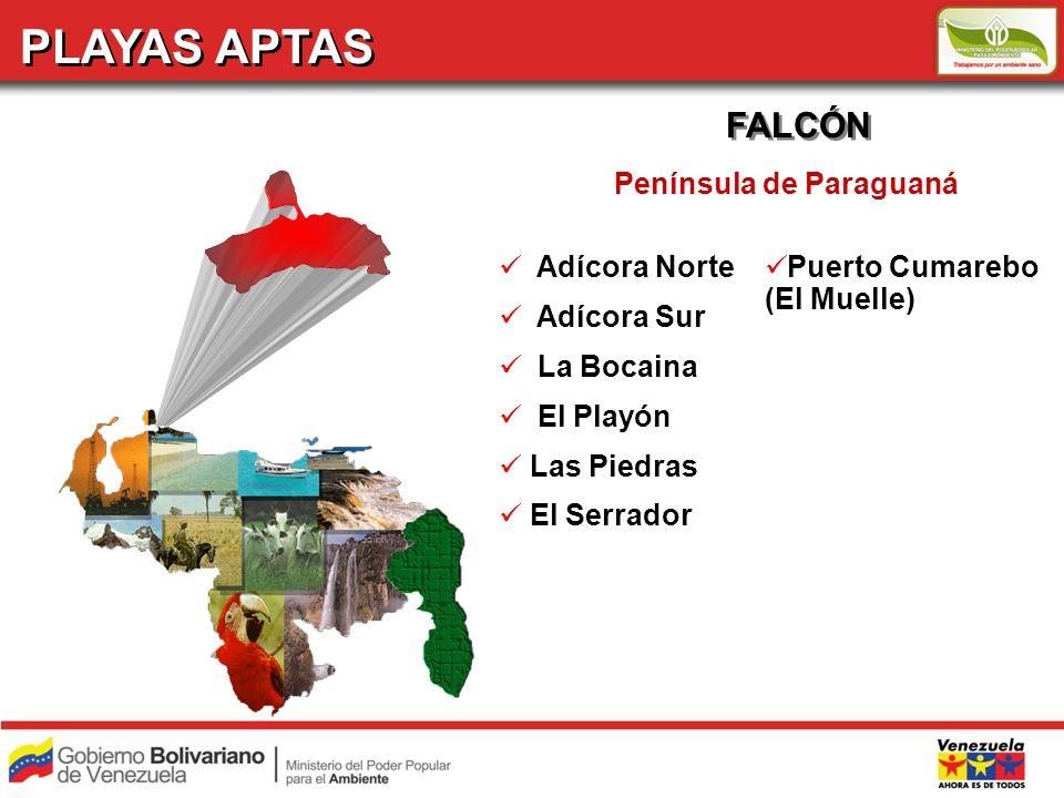 PLAYAS APTAS FALCÓN Adícora Norte Adícora Sur La Bocaina El Playón Las Piedras El Serrador Península de Paraguaná Puerto Cumarebo (El Muelle)