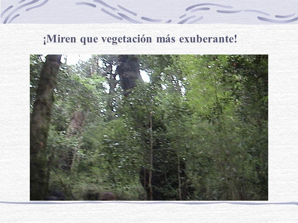 También existen unos árboles llamados robles, son importantes porque viven muchos años, alcanzan gran altura y diámetro.