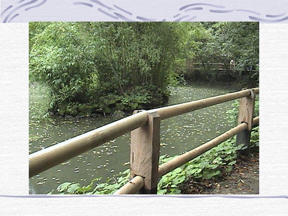 El guarda-parque nos contaba.... Que existe una laguna artificial, es decir, que fue creada por el hombre para hacer más real este hábitat para las es